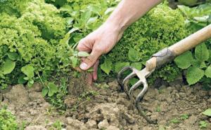 Gardening Rant – Weeds